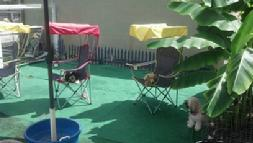 mount pleasant doggy daycare, mount pleasant dog boarding facilities, charleston dog kennels