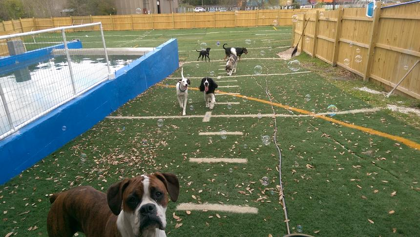 dog daycare north charleston sc, dog boarding north charleston sc, dog trainers north charleston sc, dog kennels charleston sc summerville sc